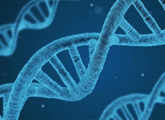 遺伝子治療剤を使った治療原理について