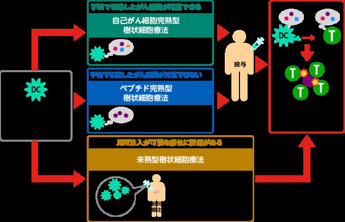 樹状細胞療法(DC療法)について