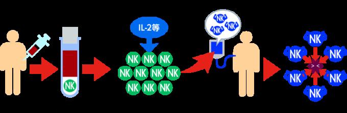 NK細胞によるがん攻撃