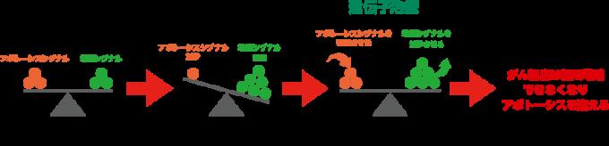 増殖とアポトーシスのバランス